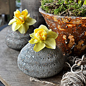 Daffodil Flowers Single In Stone Vases