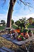Autumn Arrangement On Table In The Garden