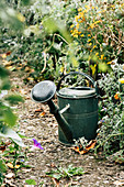 Old Watering Can At The Bed
