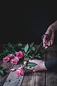 Hände schneiden Blätter von rosa Rosen