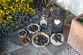 Succulents in decorative concrete bowls on terrace