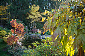 Pond in autumnal garden