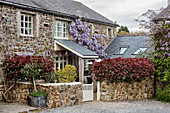 Wisteria growing on facade of stone house