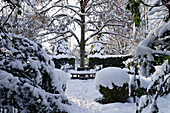 Snow-covered tree bench in wintry garden