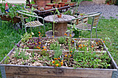 Urban gardening: herbs and summer flowers in raised bed