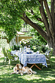 Dog lies in front of the set table with green chairs in the garden