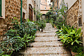 Steps lined with plants leading between Mediterranean houses