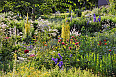 Natural garden with mullein, Indian armchair, larkspur and valerian