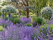 Garden with catnip, larkspur and willow stems