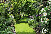 Lawn path between flowerbeds with garlic and woody plants