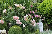 English Rose 'Wild Eve'