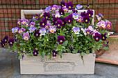 Wooden basket with horned violets
