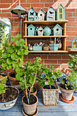 Pots with geranium and shelf with nesting boxes for birds and beneficials