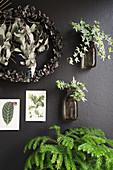 Arrangement of plants and botanical postcards on black wall