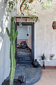 Cactus in front of front door of Mediterranean house