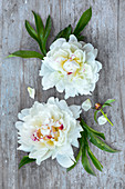 White peonies on wooden surface