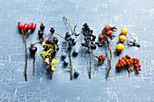 Twigs bearing wild fruits