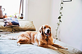 Dog lying on bed in bedroom