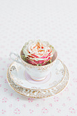 Rose in collector's teacup