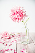 Peony in glass bottle