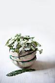Gestapelte Schalen mit Gemeiner Schafgarbe (Achillea millefolium)
