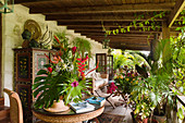 Heliconias on table on terrace with cane furniture and bursting with bourgainvillea and sealing wax plants