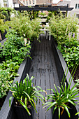 Lushly planted raised beds lining entrance to roof terrace