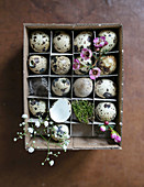 Quail's eggs with spring flowers