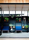 Blue upholstered chairs on black wall with shelves for plants