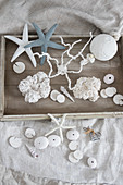Coral ornaments handmade from sponge and plaster