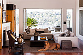 Dog lies in the living room with an open panoramic window