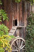 Cat ladder leading into wooden shed