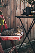 Cat on wooden chair next to set table in garden