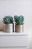 Pflanzentöpfe auf weißer Kommode