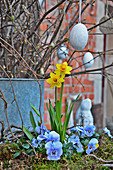 Horned violets and daffodils in front of an Easter bouquet made of branches