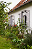 Flowerbed in wild garden outside country house with grey shutters