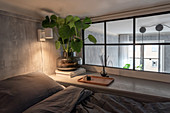 Swiss cheese plant next to interior window and next to bed in grey bedroom