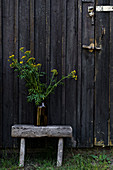 Yellow-flowering wild flowers in vase on rustic stool against dark wooden door