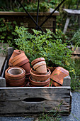 Various terracotta plant pots in rustic wooden crate