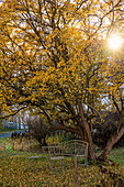Metal garden furniture below tree with yellow leaves