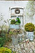 Bepflanzte Zinkgefäße mit Buchs und Annemone, alter Fensterrahmen und Klappstuhl