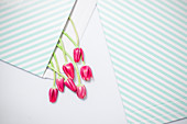 Pink tulips in striped envelope