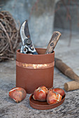 Secateurs and plant bulbs in tin painted rust-red