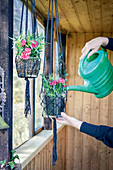 Watering macrame hanging planters in summer house