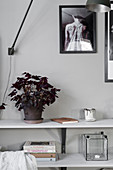 Potted red oxalis on shelf on shelf against pale grey wall