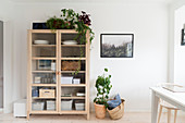 Pale wooden display case and houseplants in dining room