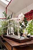 Mounted animal skeleton decorating table in white interior