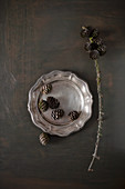 Larch cones on pewter plate