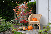 Halloween pumpkins, ornamental gourds and basket of chrysanthemums on terrace