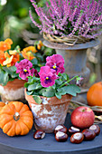 Table in garden decorated for autumn with violas, horse chestnuts, pumpkins and apples